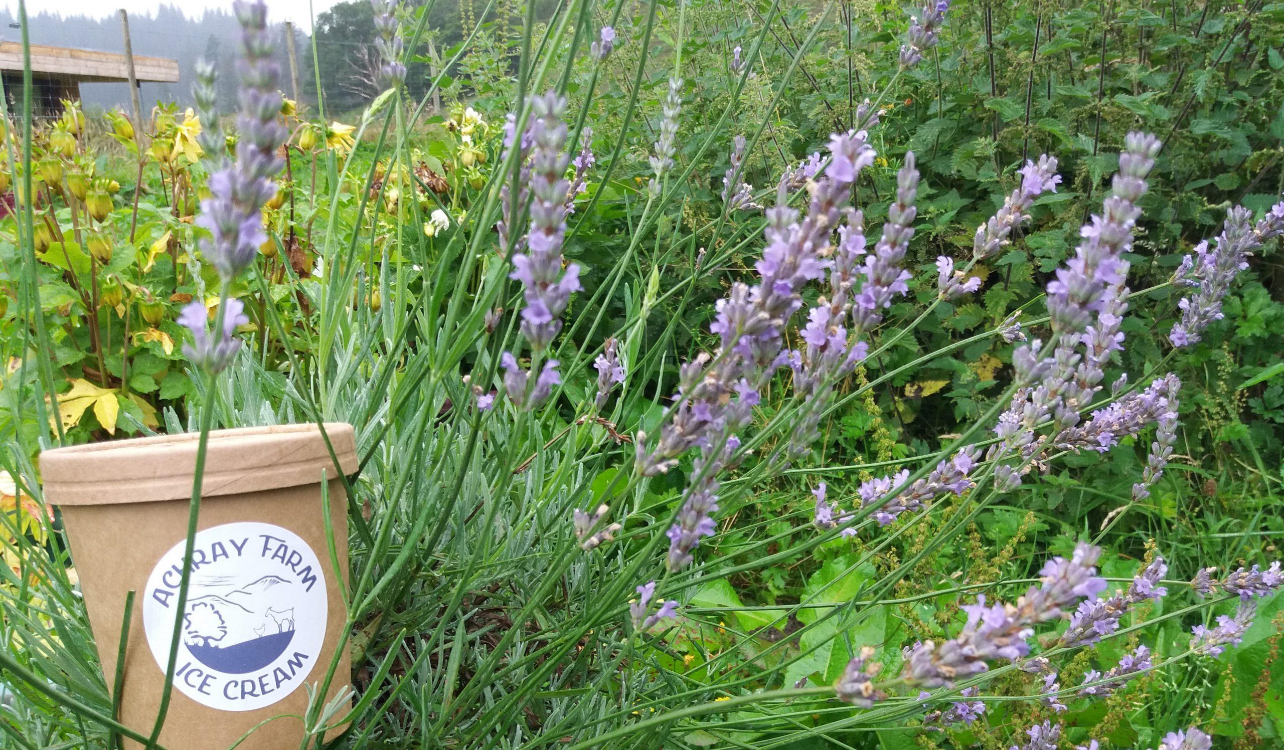 lavender icecream achray ice